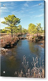 Pinelands Water Way Acrylic Print