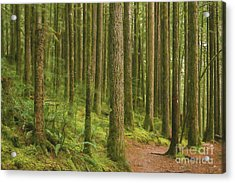Pines Ferns And Moss Acrylic Print