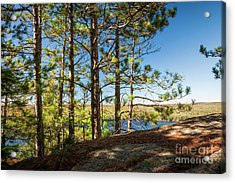 Acrylic Print featuring the photograph Pines On Sunny Cliff by Elena Elisseeva