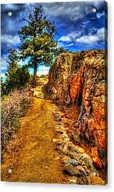 Ponderosa Pine Guarding The Trail Acrylic Print