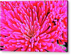 Pink 137 Acrylic Print