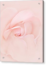 Pink Abstract Rose Flower Acrylic Print by Jennie Marie Schell