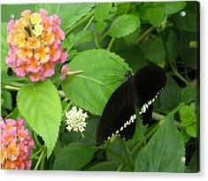 Pink And Black In The Garden Acrylic Print