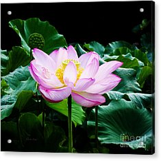 Pink And Green Floral Garden Ballet 11u Lotus Bloom Acrylic Print