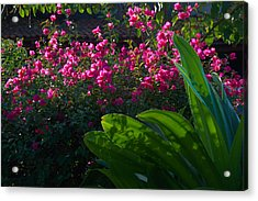 Pink And Green Acrylic Print by Jim Walls PhotoArtist