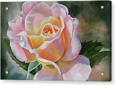 Pink And Peach Rose Bud Acrylic Print