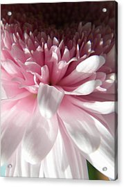 Pink And White Acrylic Print by Alyona Firth