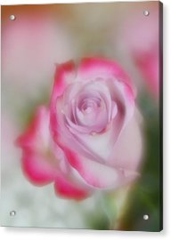Acrylic Print featuring the photograph Pink And White Rose  by Diane Alexander