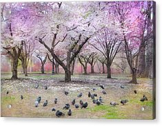 Acrylic Print featuring the photograph Pink And White Spring Blossoms - Boston Common by Joann Vitali