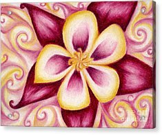 Pink And Yellow Columbine Flower Drawing Acrylic Print