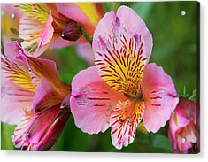 Pink And Yellow Flora Acrylic Print