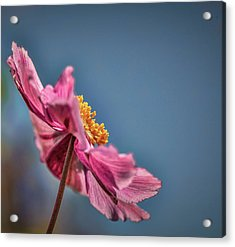 Acrylic Print featuring the photograph Pink And Yellow Profile #h8 by Leif Sohlman