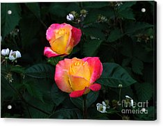 Pink And Yellow Rose With Raspberrys Acrylic Print
