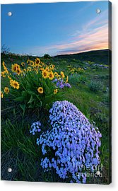 Pink And Yellow Sunset Acrylic Print by Mike Dawson