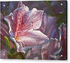 Pink Azalea Acrylic Print