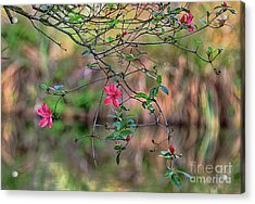 Acrylic Print featuring the photograph Pink Azalea Dream by Deborah Benoit