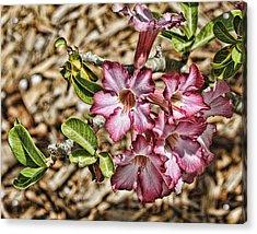Pink Azalea IIi Acrylic Print