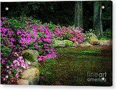 Pink Azaleas At The Azalea Festival Acrylic Print by Tamyra Ayles