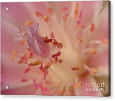 Pink Bliss Acrylic Print by Katie LaSalle-Lowery