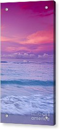 Pink Bliss -  Part 3 Of 3 Acrylic Print