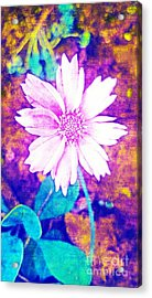 Pink Bloom Acrylic Print by Rachel Hannah