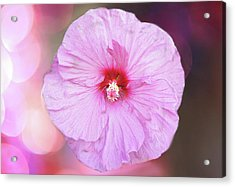 Pink Blossom Acrylic Print by Art Spectrum