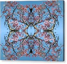 Pink Blossom Mandala Acrylic Print