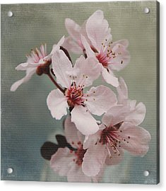 Pink Blossoms 2- Art By Linda Woods Acrylic Print