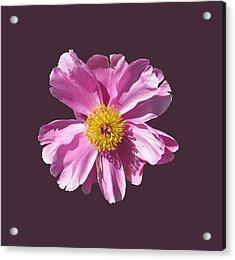 Pink Burst Acrylic Print