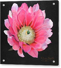 Acrylic Print featuring the painting Pink Cactus Flower by M Diane Bonaparte