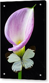 Pink Calla Lily With White Butterfly Acrylic Print