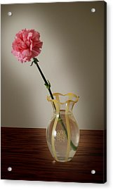 Pink Carnation Acrylic Print by Dave Chafin