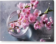 Pink Cherry Blossom Acrylic Print