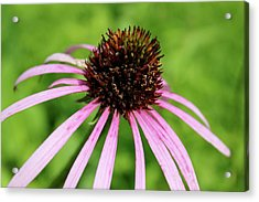 Acrylic Print featuring the photograph Pink by Christie Minalga