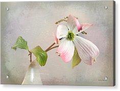 Pink Cornus Kousa Dogwood Blossom Acrylic Print