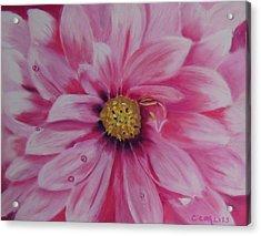 Pink Dahlia I Acrylic Print