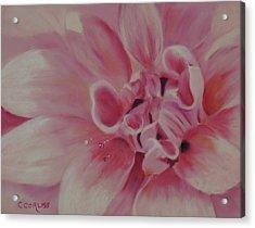 Pink Dahlia II Acrylic Print