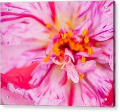 Pink Acrylic Print by David Waldrop
