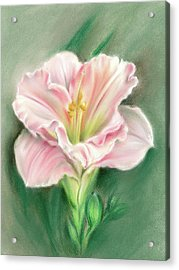 Pink Daylily And Green Buds Acrylic Print