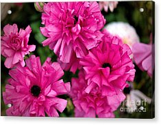 Acrylic Print featuring the photograph Pink by Diana Mary Sharpton