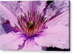 Pink Acrylic Print by Diane E Berry
