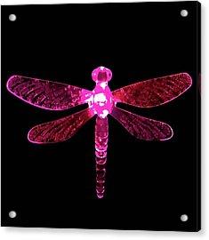 Pink Dragonfly Acrylic Print