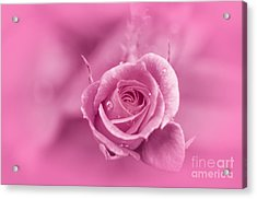 Pink Dream Acrylic Print