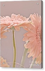 Pink Dreams Acrylic Print by Traci Cottingham