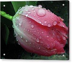 Pink Drops #2 Acrylic Print