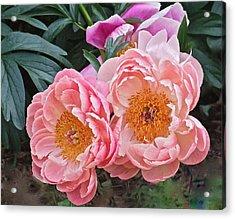Pink Duo Peony Acrylic Print