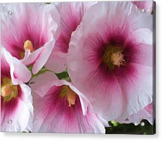 Pink-faced Hollyhocks Acrylic Print