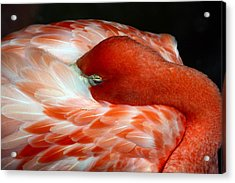 Pink Flamingo Acrylic Print by Inspirational Photo Creations Audrey Woods