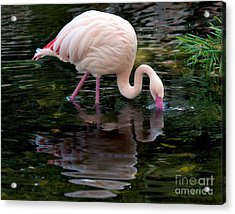 Acrylic Print featuring the photograph Pink Flamingo by Ken Frischkorn