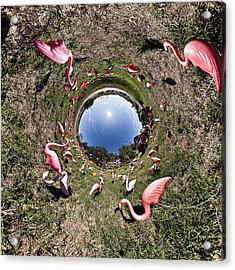 Pink Flamingo Rabbit Hole Acrylic Print